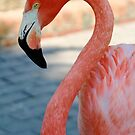Flamingo 3 by Sheryl Unwin