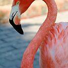 Flamingo 3 by Sheryl Unwin