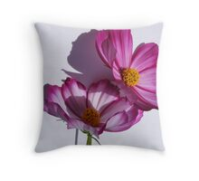 cosmea flower close up Throw Pillow