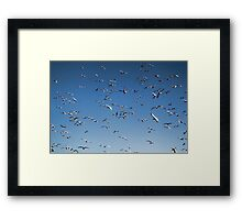 A sky filled with bird's Framed Print