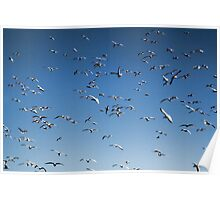 A sky filled with bird's Poster