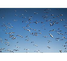 A sky filled with bird's Photographic Print