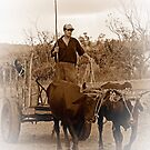 Ox drawn cart, Vinales, Cuba (Sepia version) by buttonpresser
