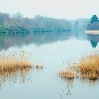 Misty Morning by DonDavisUK