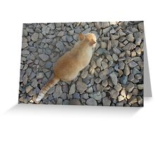 Butter On The Rocks Greeting Card