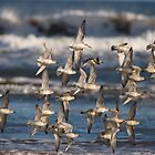 Knot in Flight by Nigel Tinlin
