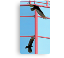 Turkey vulture with shadow reflected in glass building Canvas Print