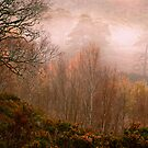 Caledonian Forest Sunrise by Tim Haynes