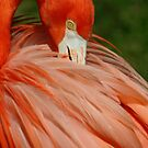 Flamingo 6 by Sheryl Unwin