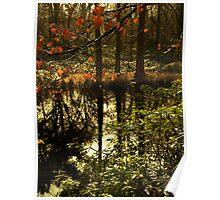 Golden green lake scene Poster