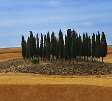 Cypress Hill by FOTIS MAVROUDAKIS