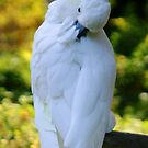 Sulpher Crested Cockatoo 3 by Sheryl Unwin