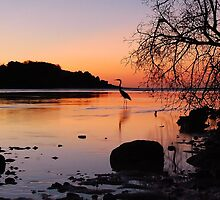 Heron Sunset 2 by Leon Heyns