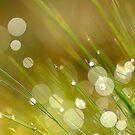 Blades of Grass by Kasia Nowak