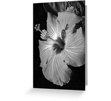 Hibiscus Black and Whitus Greeting Card