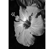 Hibiscus Black and Whitus Photographic Print