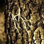 Airplant on Oak by Glenn Cecero