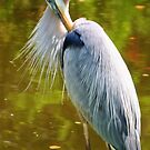 Great Blue Heron by Sheryl Unwin