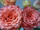 pinky double bloom by LisaBeth