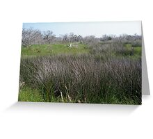 Salt Marsh - Outer Banks, NC Greeting Card