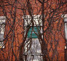vines by eelsblueEllen