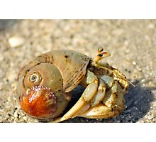 Hermit Crab Photographic Print