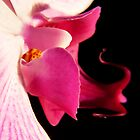 Pink Orchid 1  by photolyns