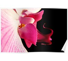 Pink Orchid 1  Poster