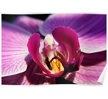 Pink Orchid 3 Poster