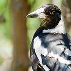 Sharp Eyed Magpie by jayneeldred
