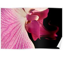 Pink Orchid 7 Poster