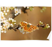 plum blossomed with comma Poster