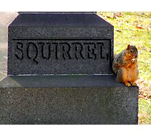RIP Squirrel  Photographic Print