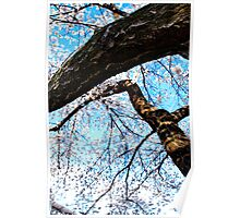 Twisting Into Spring Poster