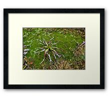 Cushion Plant Community Framed Print