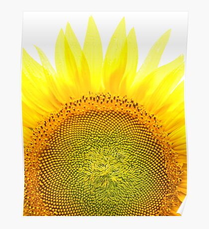 Sunflower Transparency Poster