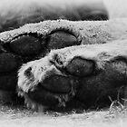 Tiny tootsies B&W by ©FoxfireGallery / FloorOne Photography