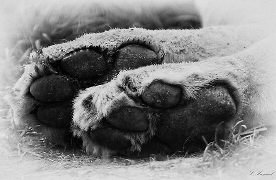 Tiny tootsies B&W by ©FoxfireGallery / FloorOne Photography