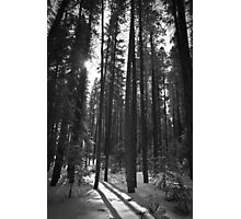 Trees and Shadows Photographic Print