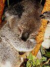 Sleepy Koala #1 by Kayleigh Walmsley