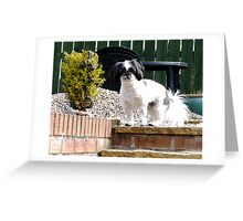 Bella In The Garden Greeting Card