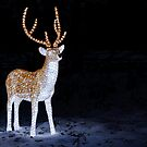 Illuminated Reindear by Antony Ward