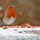 Curious Robin by Antony Ward
