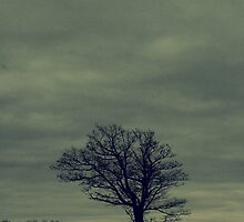 Lonely tree in winter by vel0811