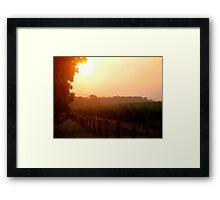 Sunset in a vineyard Framed Print