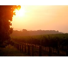 Sunset in a vineyard Photographic Print