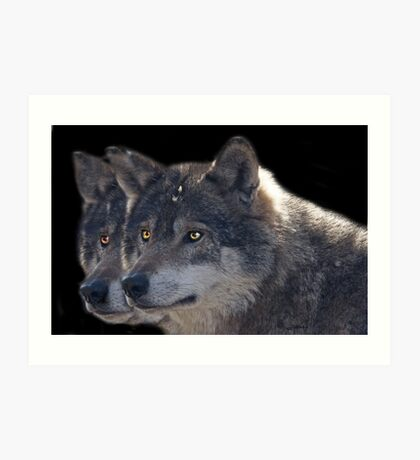 Canis Lupus , two in a Row Art Print