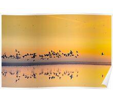 Sunrise in polder Poster