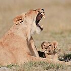 Lioness & Cub Amboseli National Park, Kenya by Sue Earnshaw