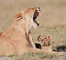 Lioness & Cub Amboseli National Park, Kenya by Sue Earnshaw